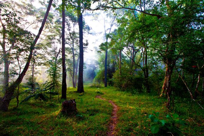The call of the woods - Priya Rajan