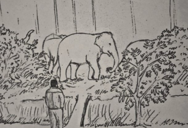 Night of elephants  - Vinod Kantamneni