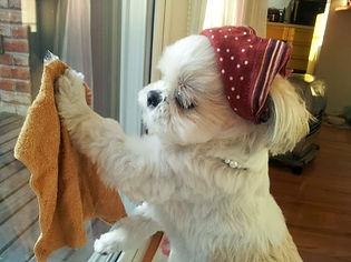清掃 犬.jpg