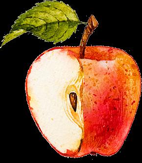 りんごの説明イラスト.png