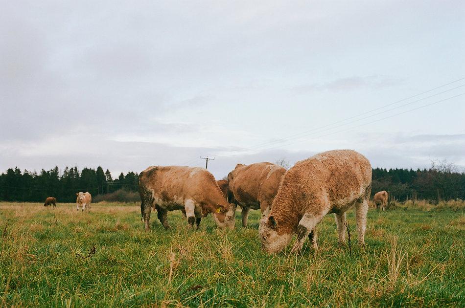 Balbirnie Home Farm (Angus D. Birditt, O