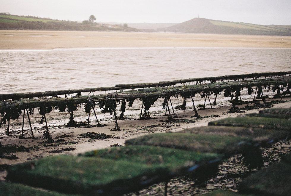 Porthilly Oyster Farm Chloe Bell Photogr