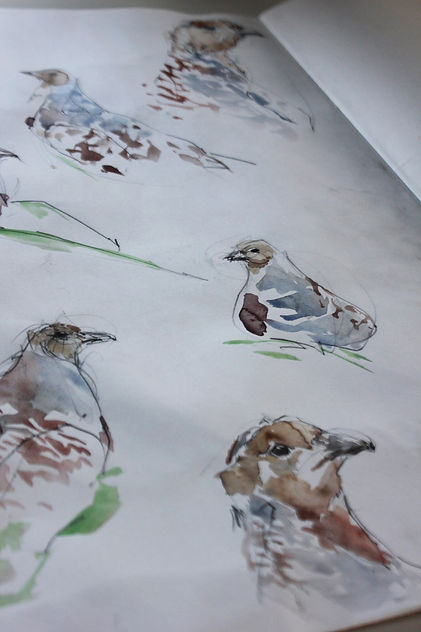 S Newton Grey Partridge.jpg