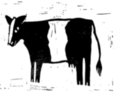 New Belted Galloway Cow.jpeg