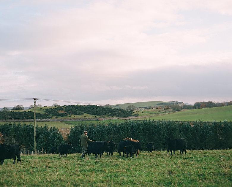 Fife Dexters (Angus D. Birditt, Our Isle