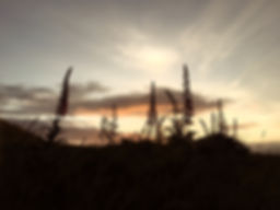 Foxgloves on the Llyn .jpg