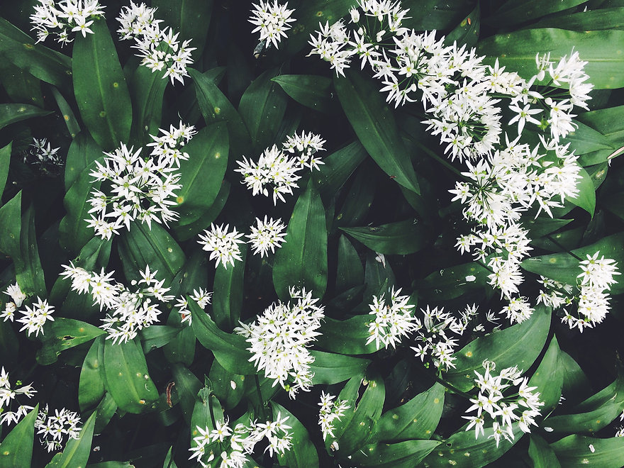 Flowers (above) .JPG