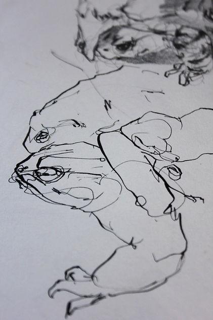 S Newton Toad drawings.jpg