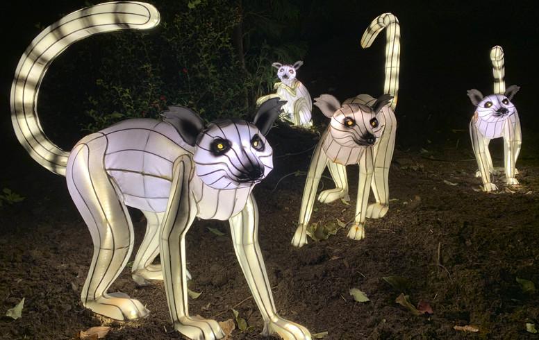 Bronx Zoo 2019 Event