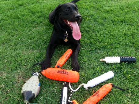 Avoid Overheating When Training Your Dog