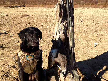 Proper Nutrition Is Essential for your Retriever During Hunting Season