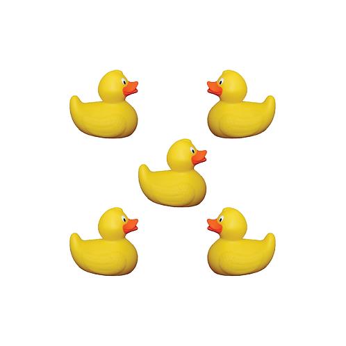 5 Duck Adoption