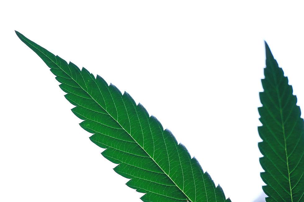 Michigan Cannabis