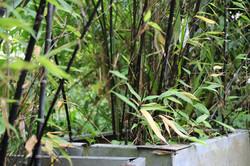 Bamboo hi.jpeg