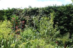 Hedge tropical v hi res.jpeg