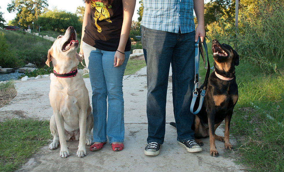 Tink and Bella and dogs 045.jpg