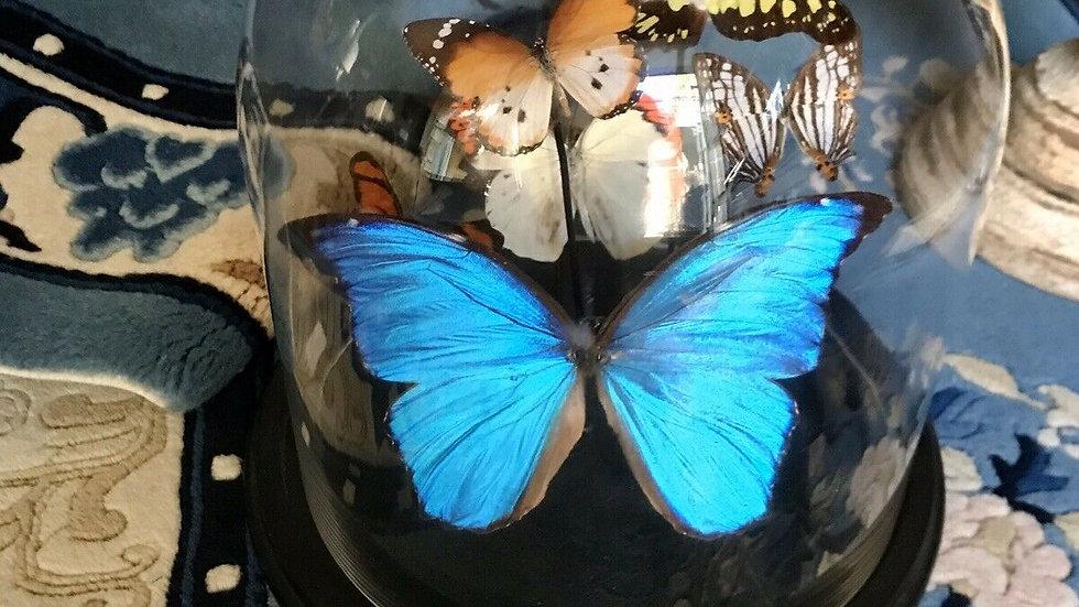 Bacheca con farfalle