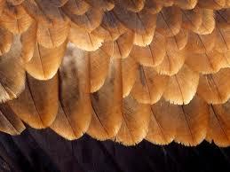 feathers web