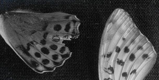 Butterfly 2014 Jane