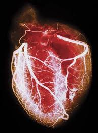 heart web