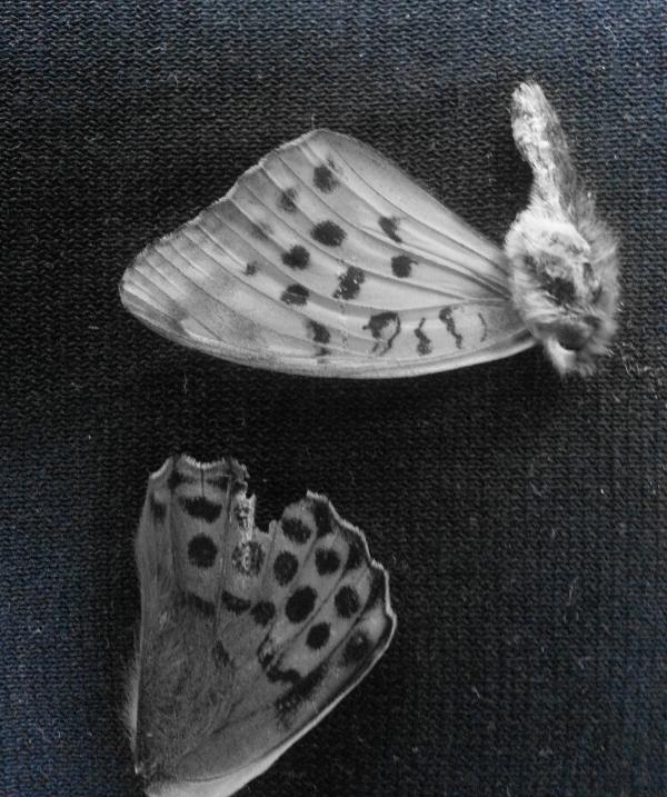 2014 Butterfly