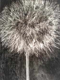 2014 Charcoal on paper 90cm x 65 cm