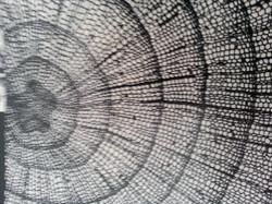 Pattern web