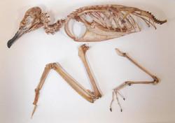 zoology-musueum-birds web