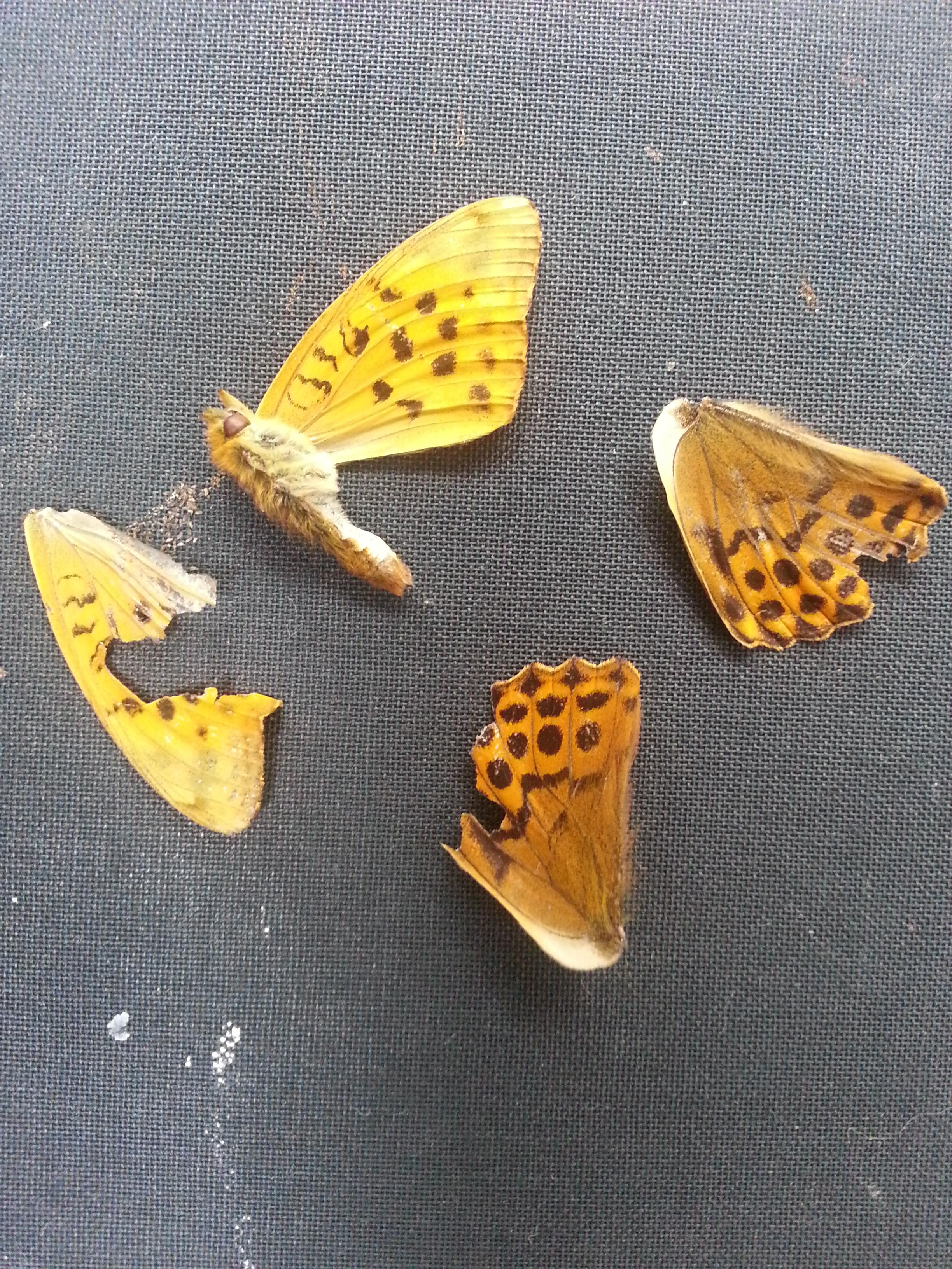 Butterfly 2014