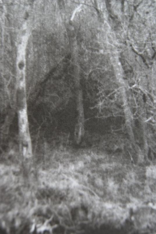 Glencree 2011