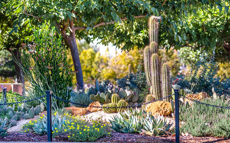 Rancho Landscape.jpg