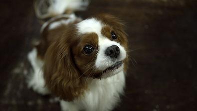HomeBound Dog.jpg