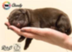 D&C Produkkita Donasi Cinere Paw Love & Hope (Cipawloho)