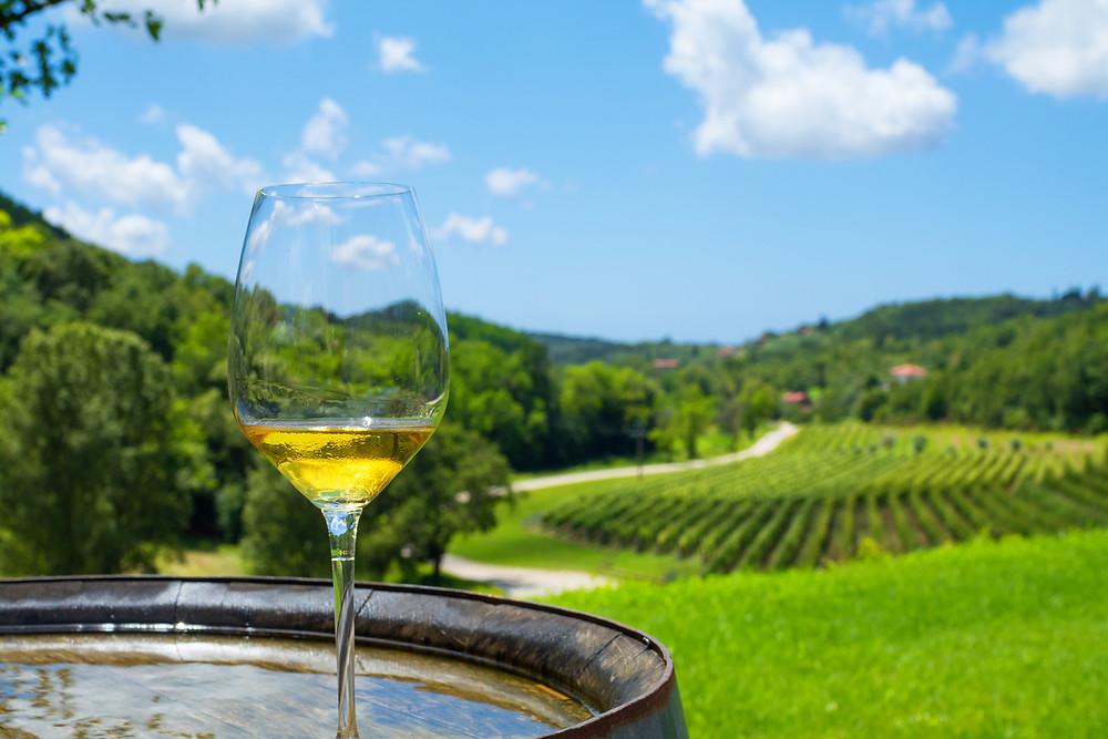 Wine Tasting in Croatia