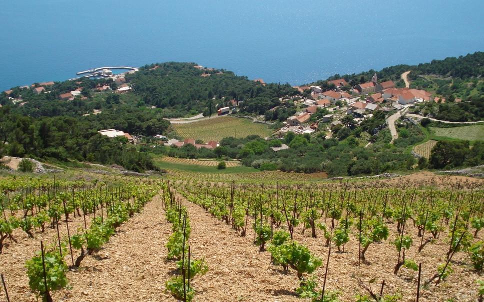 Beautiful Landscape During Wine Tours in Croatia