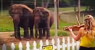 Violin And Elephants
