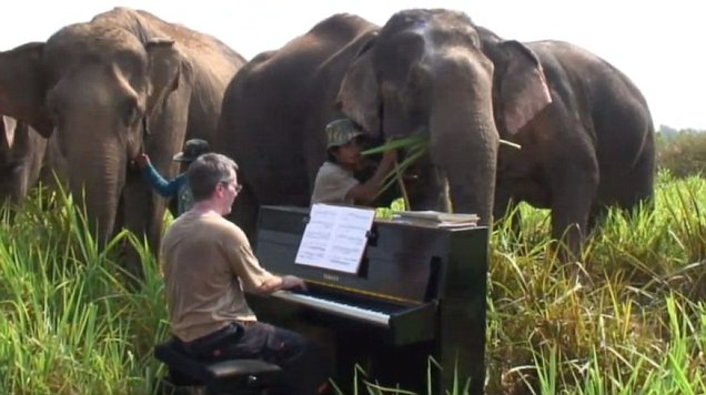 Piano And Elephants