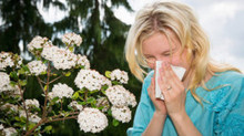 L'été sans allergies grâce à l'acupuncture