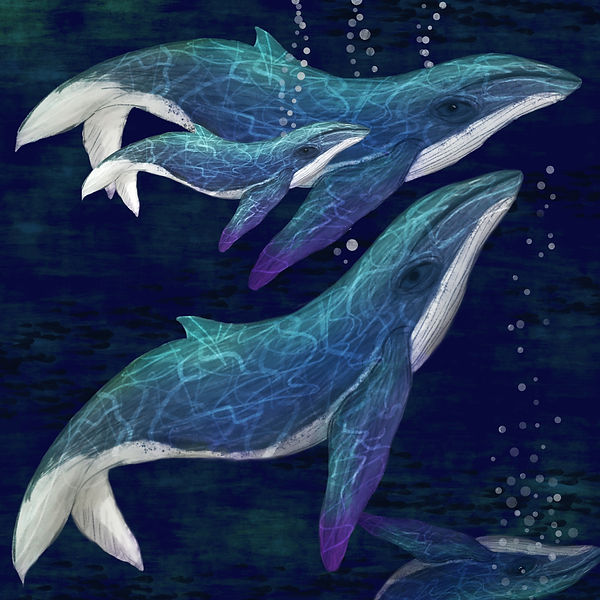 Whale Family