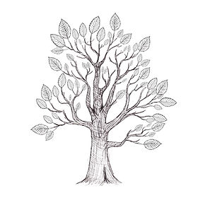 Leafy Beech.jpg
