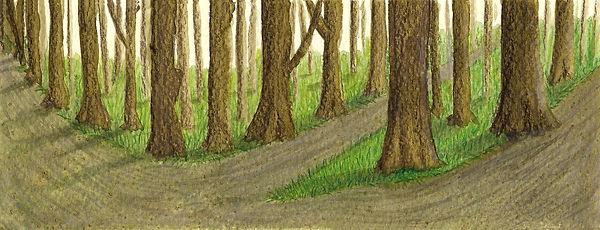 woodland 1.jpg