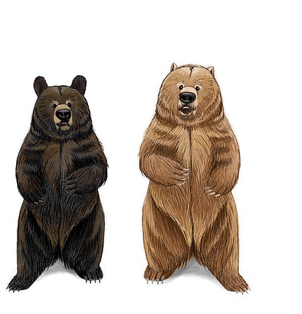Black and Grizzly bears