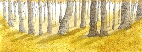 woodland 2.jpg