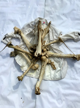 Enquiry Of Bones / Enquête Sur Les Os
