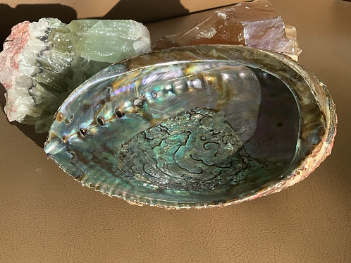 "Large Abalone Shell (7"" +)"