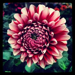 Fibonacci_8290657991_l.jpg