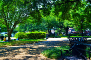 Afternoon In The Park