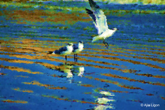 Gulls On The Gulf - Acrylic