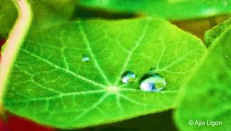 Droplets - Acrylic