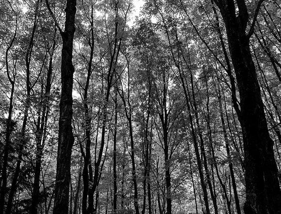 "5006 - ""Forest Dream"" - Ltd Ed. Metal Print  (assorted sizes)"